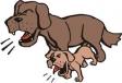 Câinii latră, caravana trece!
