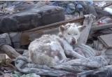 A adoptat un câine care trăia printre gunoaie şi l-a îngrijit. După câteva zile a avut o surpriză VIDEO impresionant