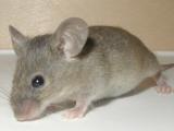 Cazul ULUITOR al tânărului care a înghițit un șoarece. A avut parte de un sfârșit înfiorător