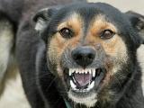 Copilul omorât de câini avea sute de mușcături pe corp