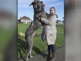 Fă cunoștință cu CEL MAI MARE câine din EUROPA! VIDEO