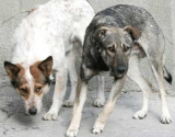 Femeia muşcată de câini în curtea ADP Sector 5 a murit.