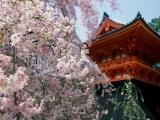 Horoscop japonez: Citate ZEN pentru zodia ta