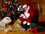 Moș Crăciun vine cu surprize mari pentru cei mici