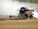 Producţie record la cereale şi rapiţă