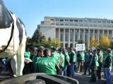 Protest de ampolare în fața Guvernului. Crescătorii de animale au ieșit în stradă