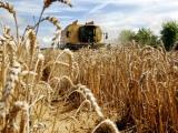 Recoltă record de cereale, de 2,46 miliarde tone, în 2013-2014