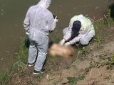 S-a descoperit brațul stâng al femeii omorâte, tranșate și aruncată în Argeș