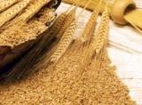 Tendinţa preţurilor la cereale