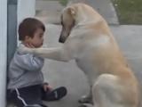 Un câine încearcă să intre în grațiile unui copil VIDEO
